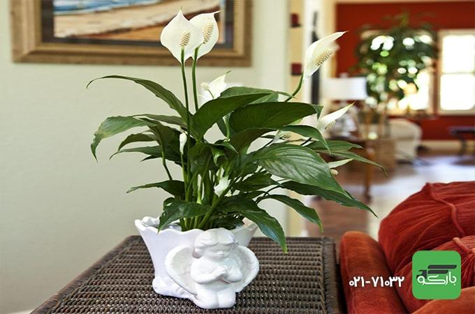 بسته بندی گل و گیاه