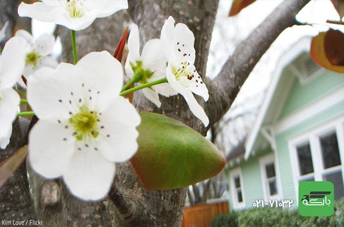 بهار بهترین زمان اسباب کشی